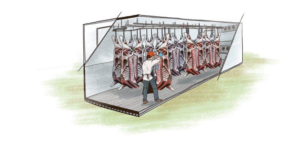 Beef carcasses in mobile meat coolers on farm after harvesting